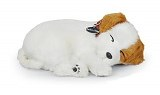 Perfect Petzzz, Jack Russell