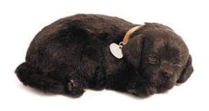 Perfect Petzzz, Labrador zwart